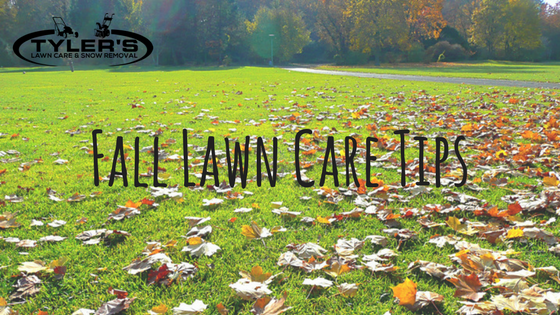 Halifax & Bedford Fall Lawn Care Tips from Tyler's Lawn Care - Title Image
