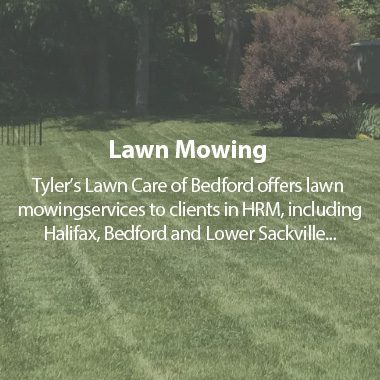 https://tylerslawncare.ca/wp-content/uploads/2018/04/TLC-Lawn-Mowing-380x380.jpg