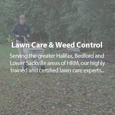 https://tylerslawncare.ca/wp-content/uploads/2018/04/TLC-lawn-care-380x380.jpg